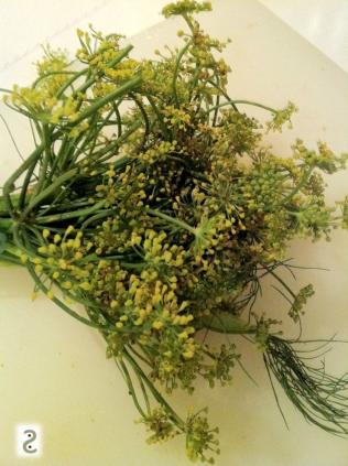 Aneth en fleurs http://wp.me/p389oa-a3
