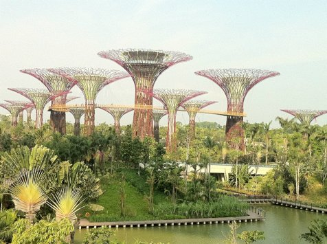 unreal.. like magic mushrooms in a SF movie..Singapore new trendy area..