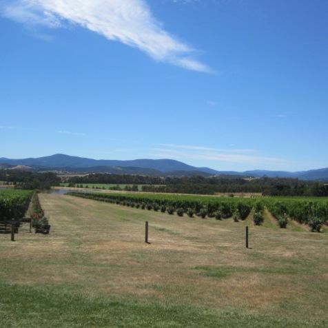 Domaine Chandon à Yarra Valley, à 90 km d'est de Melbourne. Pas le droit d'appeler ça du Champagne mais bon..