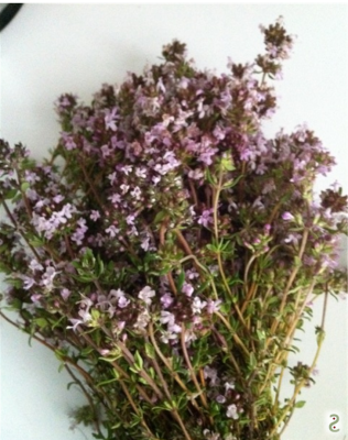 Thym en fleurs, http://wp.me/p389oa-l1