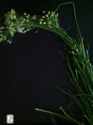 ...+ Fleur d'ail ....